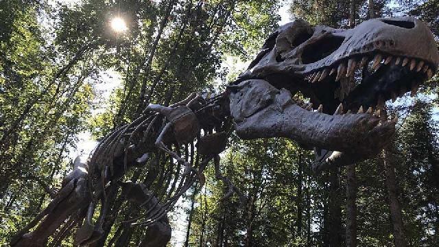 Participez à l'expédition de Vol 315 : l'ère des dinosaures, la nouvelle thématique du Woodooliparc!