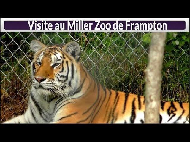 Visite au Miller Zoo
